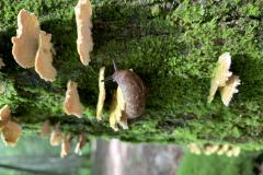 Slug Climbs Tree Fungus