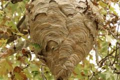 Wasp Nest Overhead