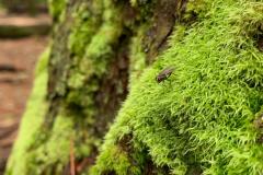 Fly on Tree Moss
