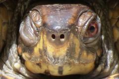 Shy Turtle Winks