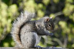 Squirrel Prays on Rail