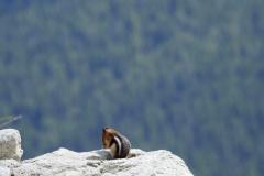 Praying Chipmunk on Mountain