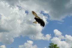 Angelic Flying Bee