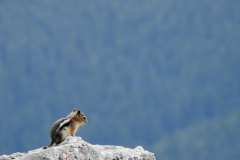 Chipmunk Looks Out to Valley Below