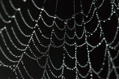 Web of Dew Drops