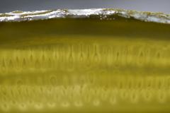 Claussen Pickle Slice  Close-up r