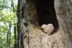 Heart Rock in a Tree