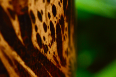 Leopard Wood 2
