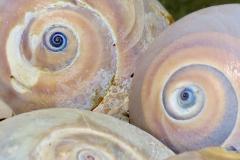 Seashell Face