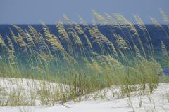 Beach Grasses Blues n Greens 1