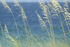 Beach Grasses Blues n Greens 2 - Vertical