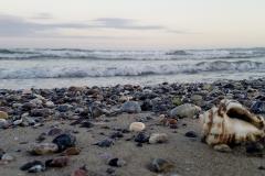 Seashell and Rocks on the Beach