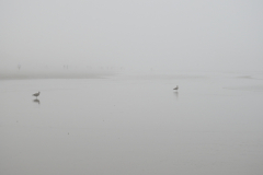 Birds on Grey Fog Beach
