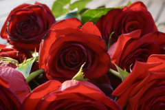 Red Roses Bouquet Close-up