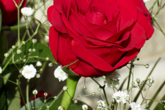 Red Rose with White Baby's Breath