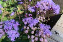 Lavender Flowers by Wood - Vertical