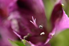 Purple Flower Pollen Close-up 5