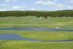Yellowstone Valley River and Trees