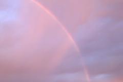 Lavender Rainbow's Edge