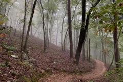 Foggy Trail Sawnee Mountain