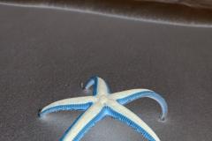 Standing Purple Starfish - Negative