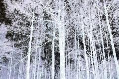 Woods Against Black Sky - Negative