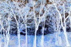 Blue Trees - Negative
