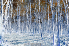 Blue Forest - Negative