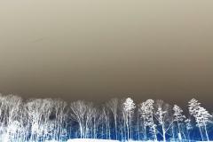 Big Sky Little Trees - Negative