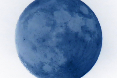 Full Cream Moon - Negative