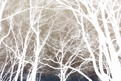 Hovering Trees - Negative