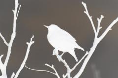 Bird on Branch Silhouette - Negative