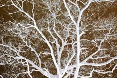 White Tree Fills - Negative