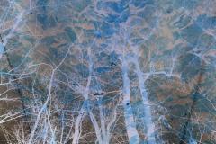 Marbled Sky Upward - Negative