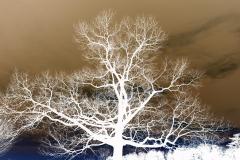 Picnic Tree at Sunset - Negative