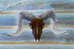 Ram Skull - Negative