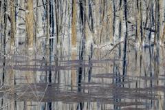 Tree Lines Crossed - Negative