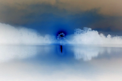 Glowing Tree on Foggy Lake - Negative