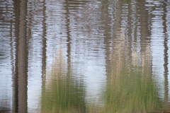 Trees and Grasses Reflect