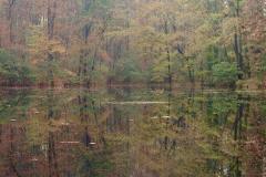 Green Fall Lake Reflection