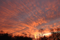 Streamers Sunset 1