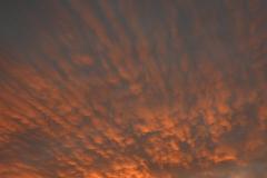 Streamers Sunset 2 - Vertical