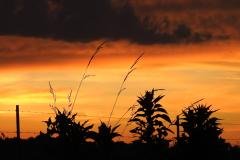 Orange Sunset with Black Grasses