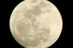Full Cream Moon