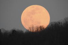 Orange Moon Rises Behind Trees