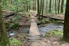 Wooden Path Crosses Creek