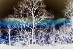 Blue Rainbow Behind Trees - Negative