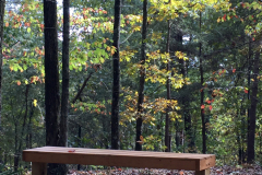Fall Bench on Trail