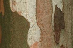 Fall Bark Camo Colors Close-up