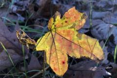Glowing Yellow Orange Leaf Close-up